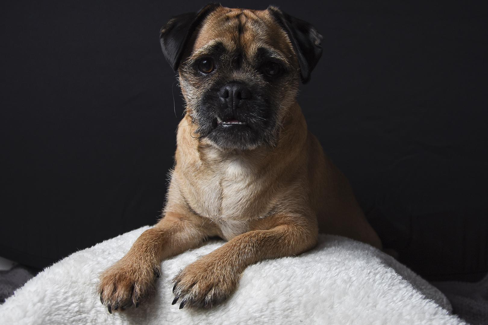 Home Pet Portraits